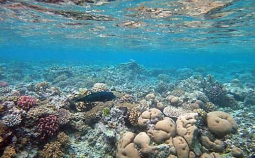 Fenomene și mistere uimitoare ale mărilor și oceanelor (II)